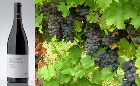 Mencia Grapes 278 172 Con Botella Resized